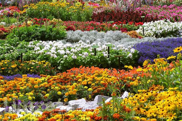 Veja os principais serviços terceirizados para jardins