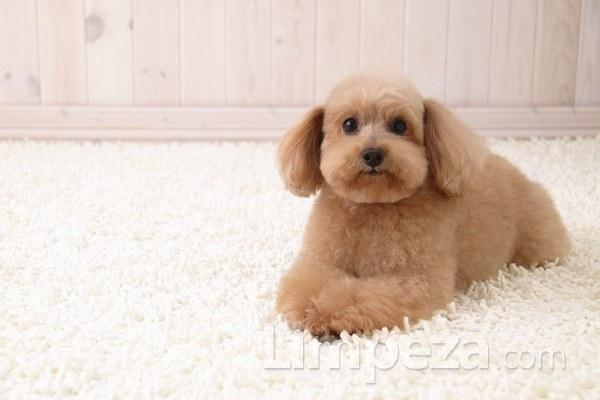 Você sabe o que o seu cão pode estar deixando em seu tapete ou carpete?