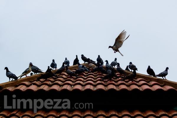 7 dicas para afastar os pombos de casa