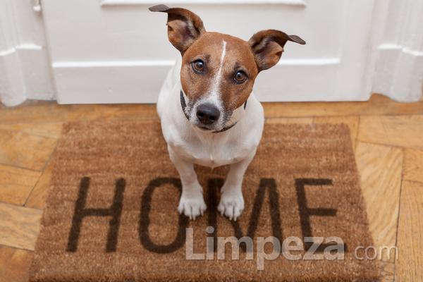Como manter a limpeza em casa com animais de estimação